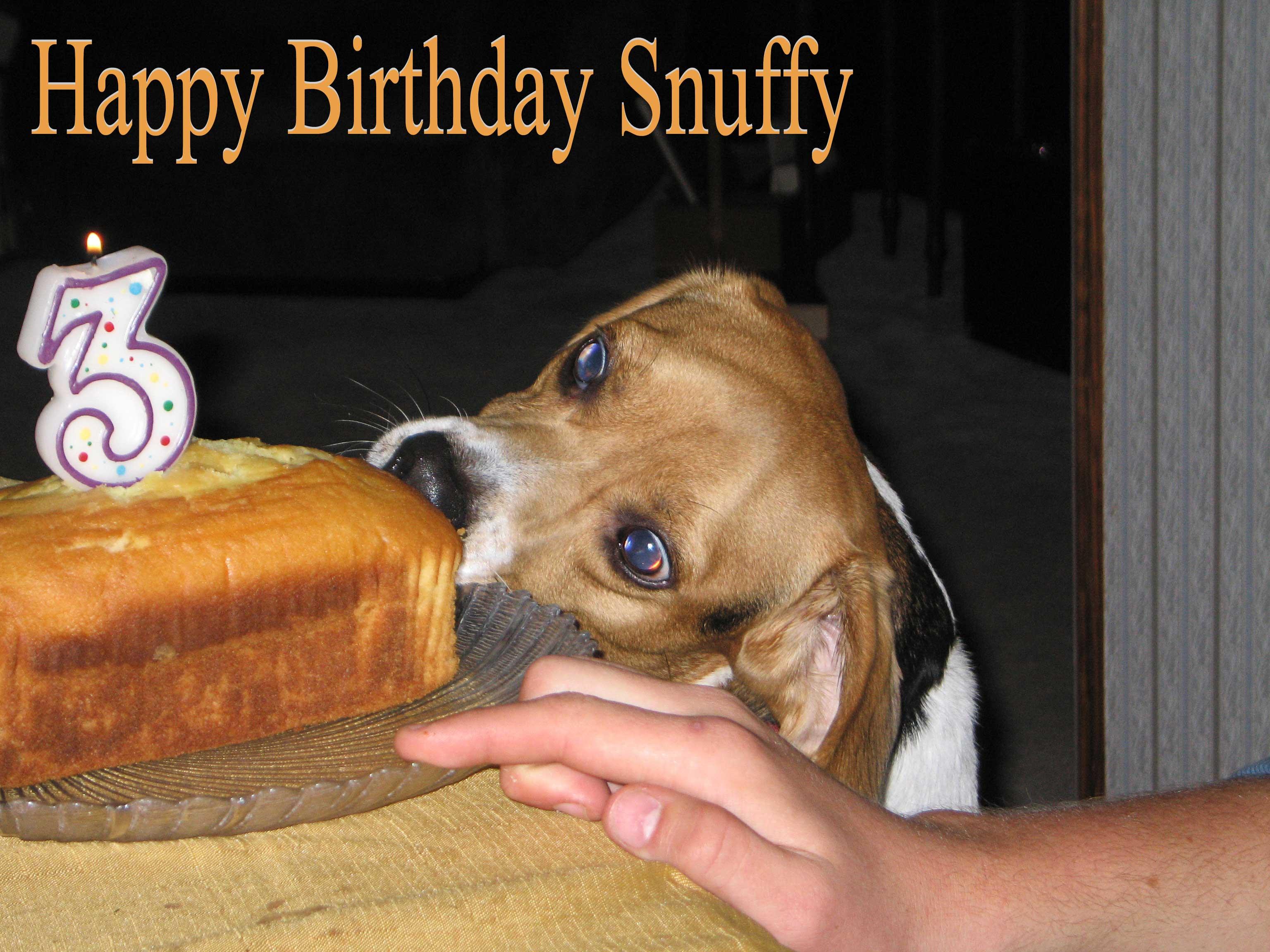 Snuffy's Bithday