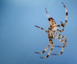 Spider 1 2